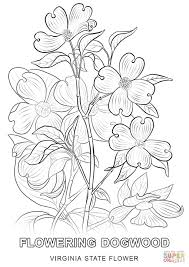 virginia state flower coloring page free printable coloring pages