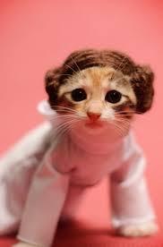 halloween kittens texas kittens in costume still hope to find forever homes