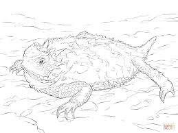 realistic texas horned lizard coloring page free printable