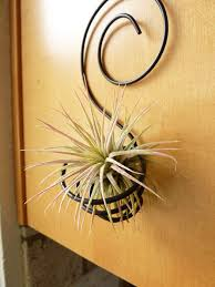 wire wall mounted holder for air plant idea of 14 ingenious ideas