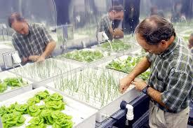 hydroponics wikipedia