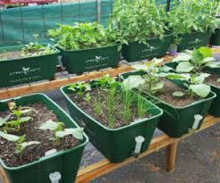 self watering pots u0026 accessories polycarbonate greenhouses
