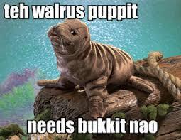 Walrus Meme - the complete walrus bucket saga