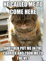 Vet Memes - he called me to come here and then put me in the carrier and took