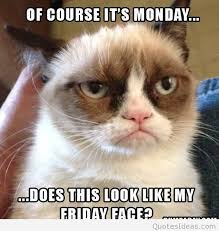 Funny Grumpy Cat Meme - funny grumpy cat meme quote i hate monday