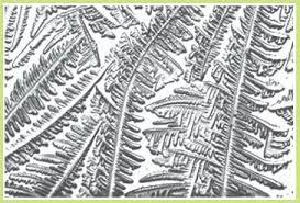 ferning pattern in spanish fertile focus the bump