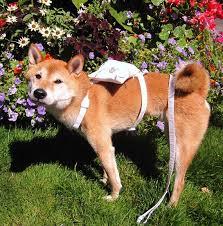 art deco dog ring holder images Ring bearer dog harness ring bearer pillow dog wedding harness jpg