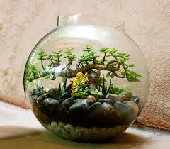 terrariums gurgaon ozziesterrariums