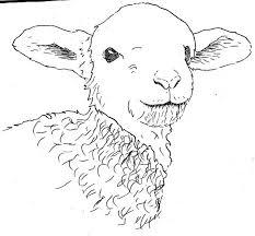 82 best lambs u0026 sheep images on pinterest lambs sheep drawing