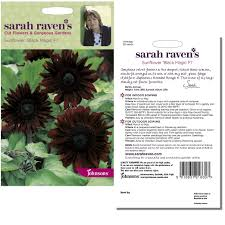 sarah raven u0027s sunflower u0027black magic f1 u0027 seeds by johnsons