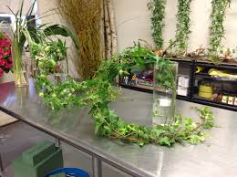 Flower Power Nyc - friday flower power type of foliage for flower arranging new