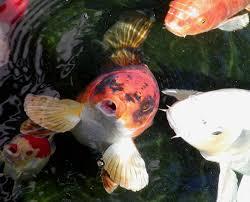 portal fish wikipedia