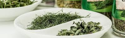 immortelle d italie cuisine la plante curry hélichrysum italicum l immortelle d italie