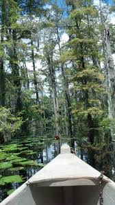 59 best cypress gardens the most beautiful place on earth for me