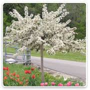 ornamental trees oconomowoc landscape supply garden center