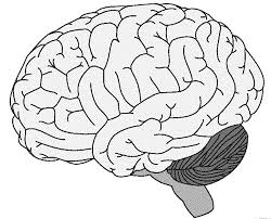 Brain Coloring Pages Funycoloring Brain Coloring Page