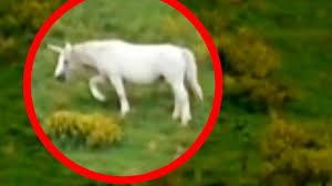 unicorns caught on tape best unicorn sightings paranormal