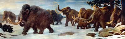 frozen mammoth carcasses siberia answers genesis