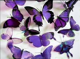 purple butterfly wallpaper wallpapers browse