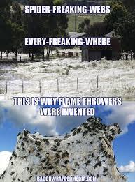 Funny Spider Meme - funny spider webs dump a day