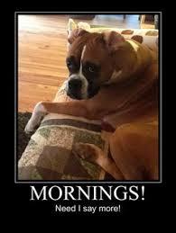 boxer dog sayings typical boxer boxers pinterest dog animal and dog cat
