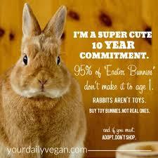 Cute Easter Meme - easter rabbits vegan meme your daily vegan