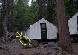 important storing food u0026 smellables yosemite tips the