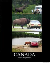 Canada Memes - canada license and registration weknowmemes