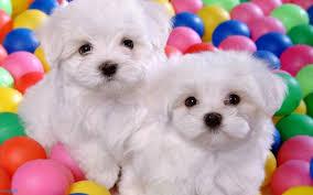 puppy dog pics color wallpaper