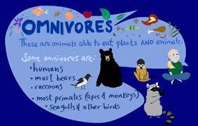 omnivores kid u0027s corner sheppard software