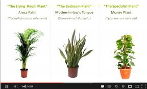 plant for bedroom at night savae org