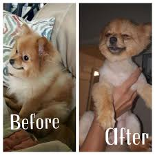 precious pet grooming salon 11 photos pet groomers 12041