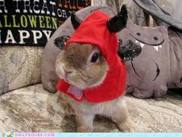 Halloween Costumes Bunny Rabbits 70 Bunny Care Images Bunny Care Bunny Rabbits