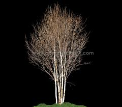 artificial birch trees with lights artificial winter birch tree commercial silk int l