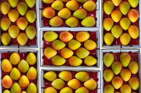 plants native to india mangoes australia history mangoes australia