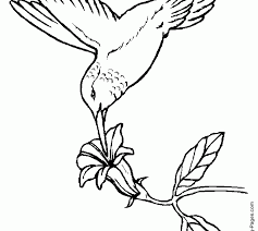 coloring page free printable bird coloring pages fresh in painting