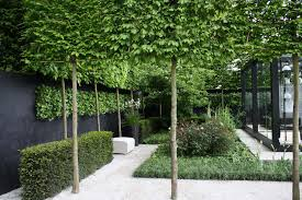 pleached trees at rhs chelsea flower show green thumb