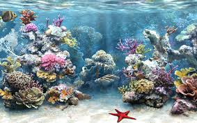 background pictures for computer free fish tank aquarium backgrounds wallpapers freecreatives free