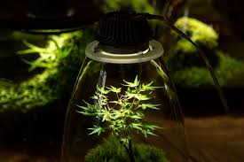 what is the best lighting for growing indoor led grow lights distance for cannabis other plants bios