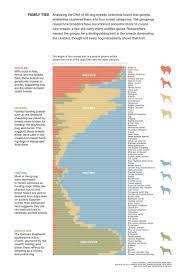 belgian sheepdog national specialty golden retriever national geographic u2013 dog life photo