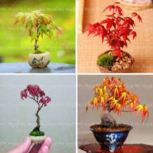 Beautiful Indoor Plants Beautiful Indoor Plants Online Shopping The World Largest