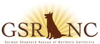 belgian shepherd rescue qld hale pet door german shepherd rescue organizations