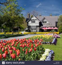 a scenic photo in christchurch new zealand of the spring flowers