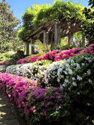 Landscaping Tyler Tx by 171 Best Tyler Texas My Home Town Images On Pinterest Spring