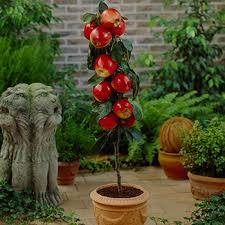 apple trees perfect for southern climates