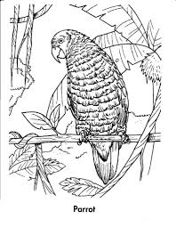 free coloring pages of equatorial forest animals 890