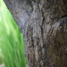 tronc d arbre artificiel olivier artificiel géant de 300 cm sur y tronc maxifleur arbres