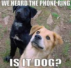 This Is Dog Meme - dog on phone meme red shadows hello this is dog ridiculous