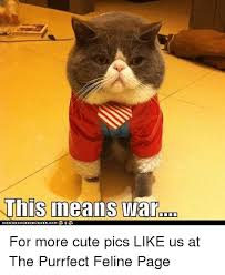 This Means War Meme - this means war icanhaschee2burgercom e for more cute pics like us at