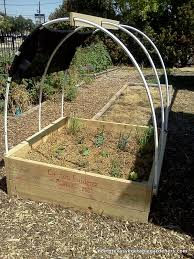 citizen gardener north texas vegetable gardeners blog
